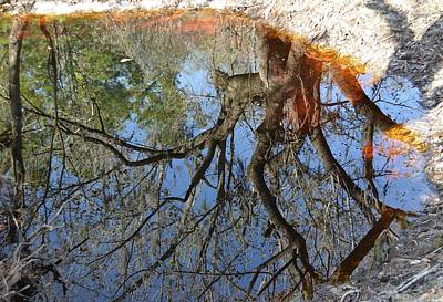 Photograph - Reflection In A Dark Pool by rd Erickson