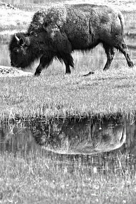 Photograph - Reflection In The Grassy Marsh Black And White by Adam Jewell