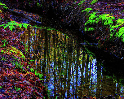 Photograph - Reflection In The Middle by Dennis Baswell