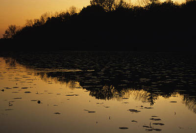 Reflection In The Water At Everglades Art Print by Stacy Gold