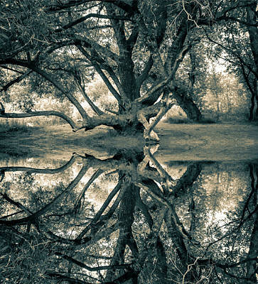 Photograph - Reflection Inversion by E j Carr