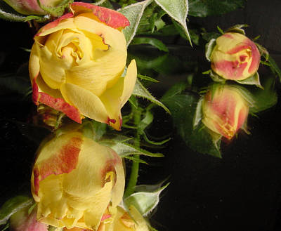 Yellow Rosebud Photograph - Reflection by Kathy Bucari