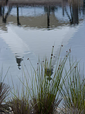 Photograph - Reflection by Laurie Hasan