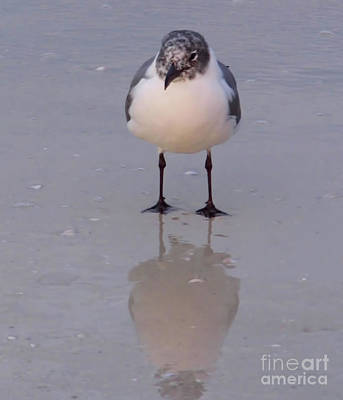 Photograph - Reflection Of A Gull by D Hackett