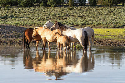 Photograph - Reflection Of A Mustang Family by Belinda Greb