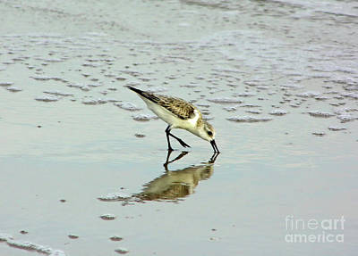 Photograph - Reflection Of A Sandpiper by D Hackett