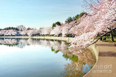 Photograph - Reflection Of Blossoms In Tidal Basin I by Karen Jorstad