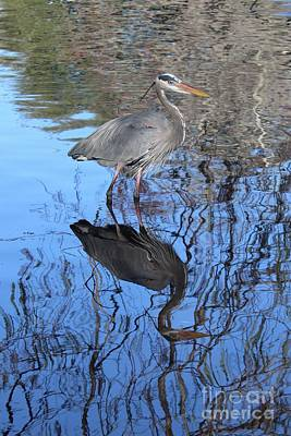 Photograph - Reflection Of Great Blue Heron by Carol Groenen