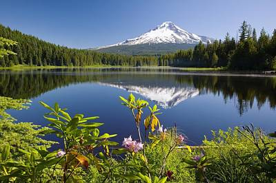Photograph - Reflection Of Mount Hood In Trillium by Craig Tuttle