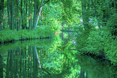 Photograph - Reflection Of Trees In The Spreewald by Sun Travels