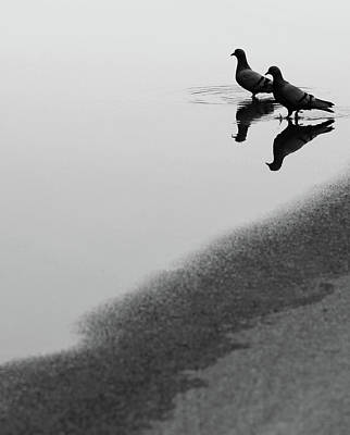 Photograph - Reflection Of Two Love Birds In Water by Prakash Ghai