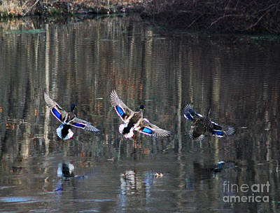 Photograph - Reflection Of Wings by Scott B Bennett