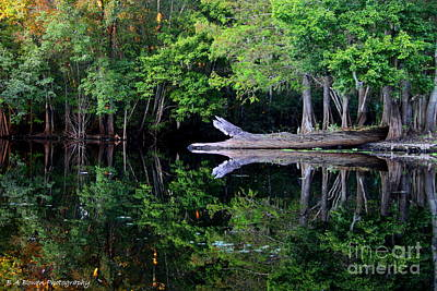 Reflection Off The Withlacoochee River Art Print by Barbara Bowen