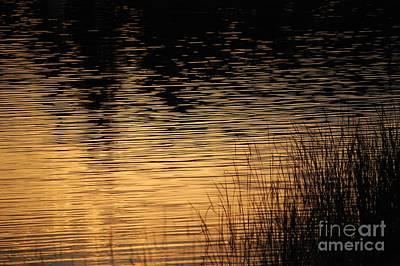 Photograph - Reflection On A Sunset by David Lane