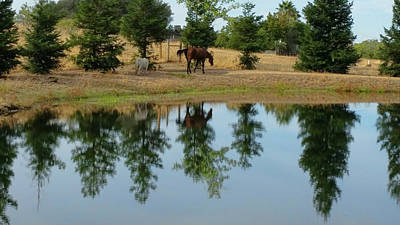 Photograph - Reflection On The Water by Pamela Walton