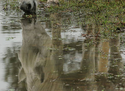 Photograph - Reflection by Pam Kaster