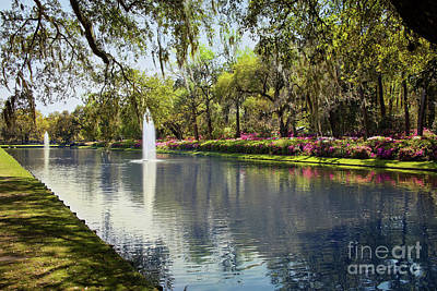 Photograph - Reflection Pond At Middleton Place by Sharon McConnell