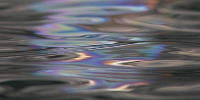 Photograph - Reflection Refraction by Cathie Douglas