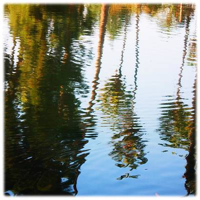 Photograph - Reflection by Sarah Vandenbusch