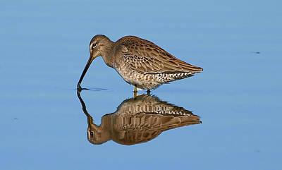 Rare Bird Sighting Photograph - Reflection Shot  by Kala King