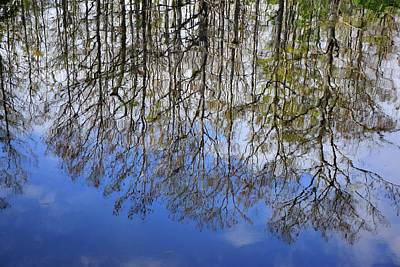 Photograph - Reflection Straight Up by Florene Welebny