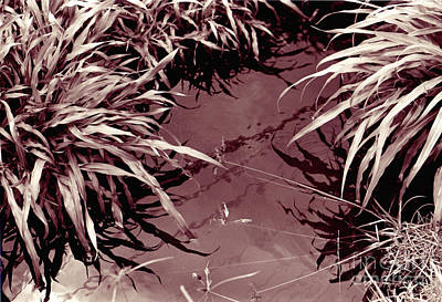 Art Print featuring the photograph Reflections 2 by Mukta Gupta