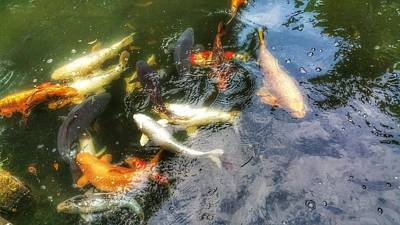 Photograph - Reflections And Fish 6 by Isabella F Abbie Shores FRSA