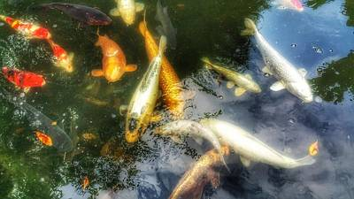 Photograph - Reflections And Fish 7 by Isabella F Abbie Shores FRSA