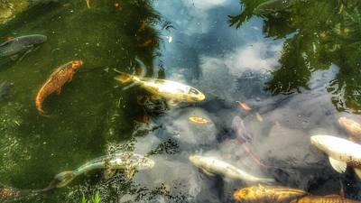 Photograph - Reflections And Fish  by Isabella F Abbie Shores FRSA