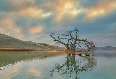 Photograph - Reflections At Sunrise by Marc Crumpler