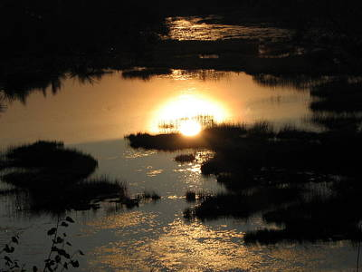 Art Print featuring the photograph Reflections At Sunset by Barbara Yearty
