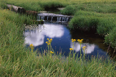 Reflections - Casa Vieja Meadows Art Print by Soli Deo Gloria Wilderness And Wildlife Photography