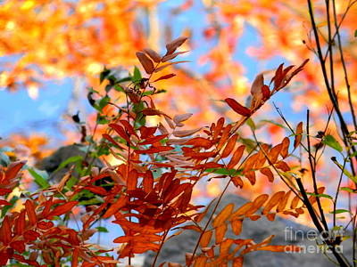 Photograph - Reflections by Elfriede Fulda