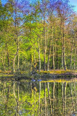 Reflections From The Pond Art Print by David Pyatt