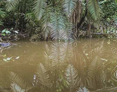 Photograph - Reflections In Amazon Tributary by Allen Sheffield