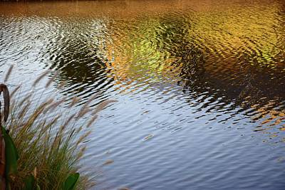 Photograph - Reflections In Gold by Florene Welebny