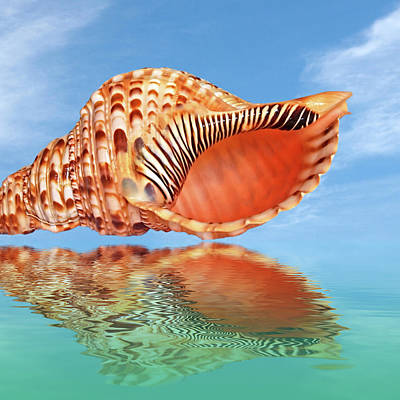 Photograph - Reflections In Paradise Square Trumpet Triton Shell by Gill Billington