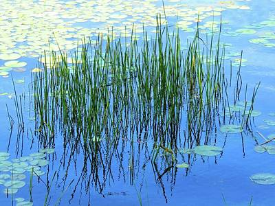 Photograph - Reflections In The Bay by Dennis McCarthy