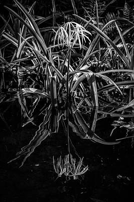Photograph - Reflections In The Black Water by Debra and Dave Vanderlaan