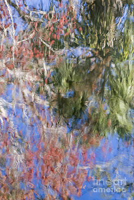 Swamp Cabbage Photograph - Reflections In The Hillsborough River by John Arnaldi