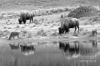 Photograph - Reflections In The Meadow Black And White by Adam Jewell