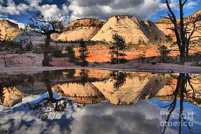 Photograph - Reflections In The Rainwater by Adam Jewell