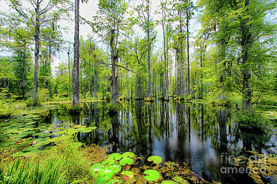 Photograph - Reflections In The Swamp by Dan Carmichael