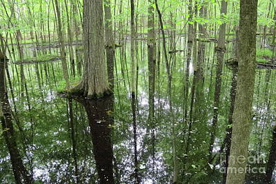 Photograph - Reflections In The Trees by Erick Schmidt