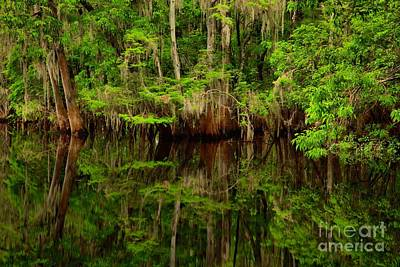 Photograph - Reflections Near The Suwannee River by Adam Jewell