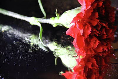 Photograph - Reflections Of A Carnation by Angela Murdock