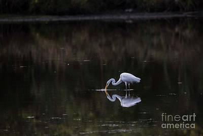 Photograph - Reflections Of A Stalker by David Bearden