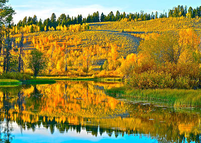 Photograph - Reflections Of Aspen Gold by Don Mercer