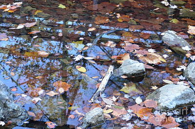 Photograph - Reflections Of Autumn 2017 by Maria Urso
