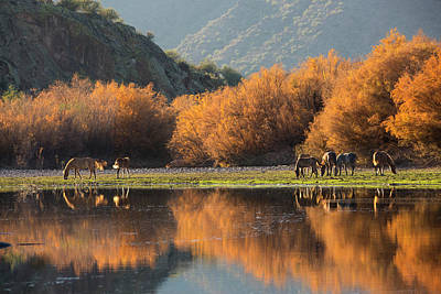 Photograph - Reflections Of Autumn On The Salt River by Sue Cullumber